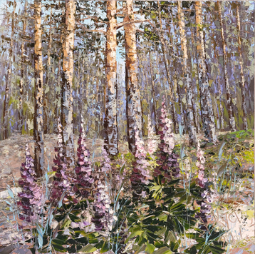 Personal gallery A lupine in the pine wood